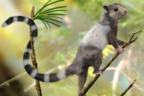 Палеонтологи нашли в Якутии новый вид древних млекопитающих