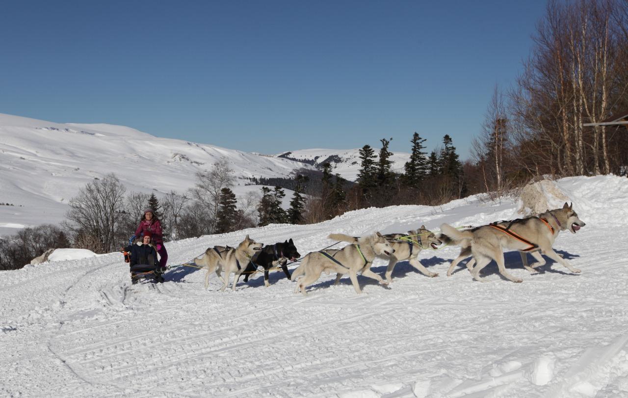 На собачьей упряжке — по плато Лагонаки